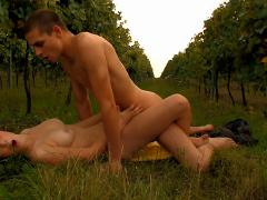 An Innocent Walk In The Vineyard, Starts With Grape Picking ...